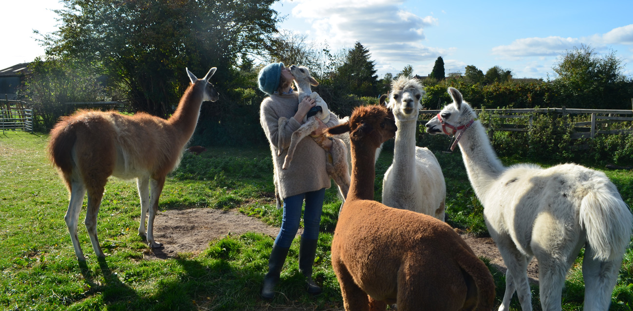 Alpaca breeder, Liz with her animals